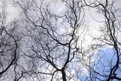 Trees i vinter Royaltyfri Fotografi