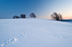 Trees i vintern Arkivbilder