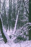 Trees i vinterskogen Royaltyfri Fotografi