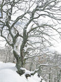 Trees i vinterskogen royaltyfri bild