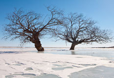 Trees in an ice Stock Image