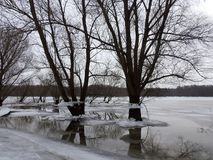 Trees with ice pieces after flood, Lithuania Stock Image