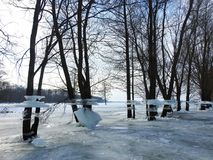 Trees with ice pieces after flood, Lithuania Royalty Free Stock Photography