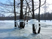 Trees with ice pieces after flood, Lithuania Royalty Free Stock Image