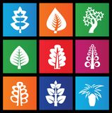 Trees icons. On colored squares Royalty Free Stock Photography