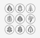Trees icons. On white background Stock Photos