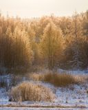 Trees illuminated by morning sun at winter Royalty Free Stock Images