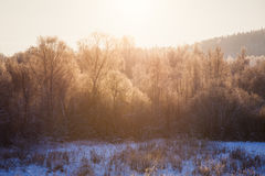 Trees illuminated by morning sun at winter Stock Photography