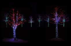 Trees Illuminated at night Royalty Free Stock Photography