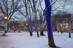 Trees illuminated to Christmas holidays at night Royalty Free Stock Photography