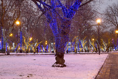 Trees illuminated to Christmas holidays at night Royalty Free Stock Photos