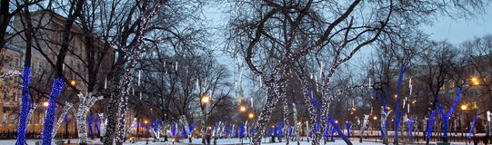Trees illuminated to Christmas holidays at night. Trees illuminated to Christmas and New Year holidays at night in Moscow, Russia Royalty Free Stock Photography