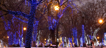 Trees illuminated to Christmas and New Year holidays at night in Moscow, Russia Stock Images