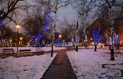 Trees illuminated to Christmas and New Year holidays at night in Moscow, Russia.  Royalty Free Stock Photos