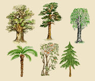 Trees illustration watercolor Royalty Free Stock Photos