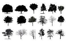 Trees. Image of trees in section stock illustration
