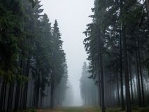 Trees In A Forest In Fog Stock Image