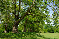 Free Trees In A London Park Royalty Free Stock Images - 54715939