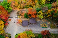 Trees In Fall Autumn Colors In An Urban Apartment Complex. Top View. South Korea Royalty Free Stock Photos