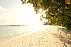 Free Trees In Maldives Near Sunny Beach Sand Stock Photography - 40190032