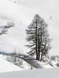 Trees In Snow Royalty Free Stock Photo
