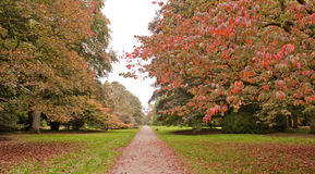 Trees In The Autumn Royalty Free Stock Photo