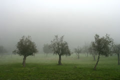 Trees In The Fog Stock Photo