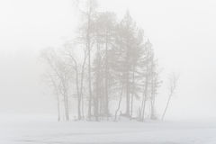 Free Trees In The Mist Stock Photography - 39617482