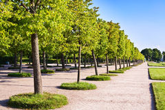 Trees In The Park Stock Photography