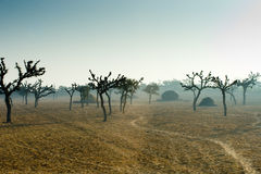 Trees in the Indian Desert stock images