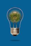 Trees inside a light bulb Stock Image