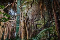 Trees inside tropical forest / rainforest / jungle Stock Photos