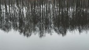 Trees inverted reflection. Winter landscape trees reflected in water stock footage