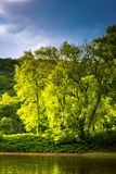 Trees on an island in the Delaware River, seen at Delaware Water Royalty Free Stock Images