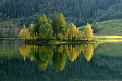 Trees on an island in the lake reflection. Norway Royalty Free Stock Images