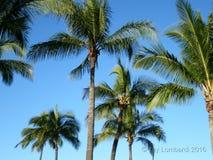 Trees on Island of Oahu Hawaii Stock Image