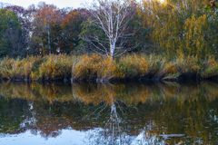 Trees on island in park. Trees on island on pond in park at autumn stock image