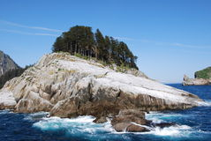 Trees on island rock Stock Photos