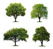 Trees isolated royalty free stock image