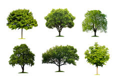 Trees isolated Stock Images