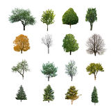 Trees are isolated Royalty Free Stock Photos