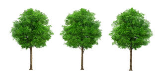 Trees on isolated background Stock Photos