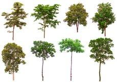 Free Trees Isolated On White Background Royalty Free Stock Photos - 110906488