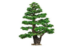 Trees isolated Royalty Free Stock Photography