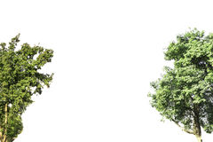 Trees on isolated white background. royalty free stock photos