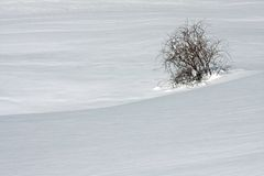 Trees on the Italian Dolomites in winter Stock Photo