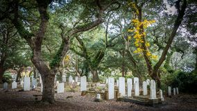 Headstones in an old cemetary royalty free stock images