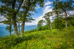 Trees at Jewell Hollow Overlook, on Skyline Drive in Shenandoah Royalty Free Stock Images