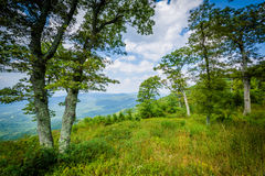 Trees at Jewell Hollow Overlook, on Skyline Drive in Shenandoah Stock Photo
