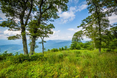 Trees at Jewell Hollow Overlook, on Skyline Drive in Shenandoah Royalty Free Stock Image